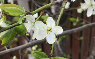 Photo Competition Shows Countrywide Signs of Spring